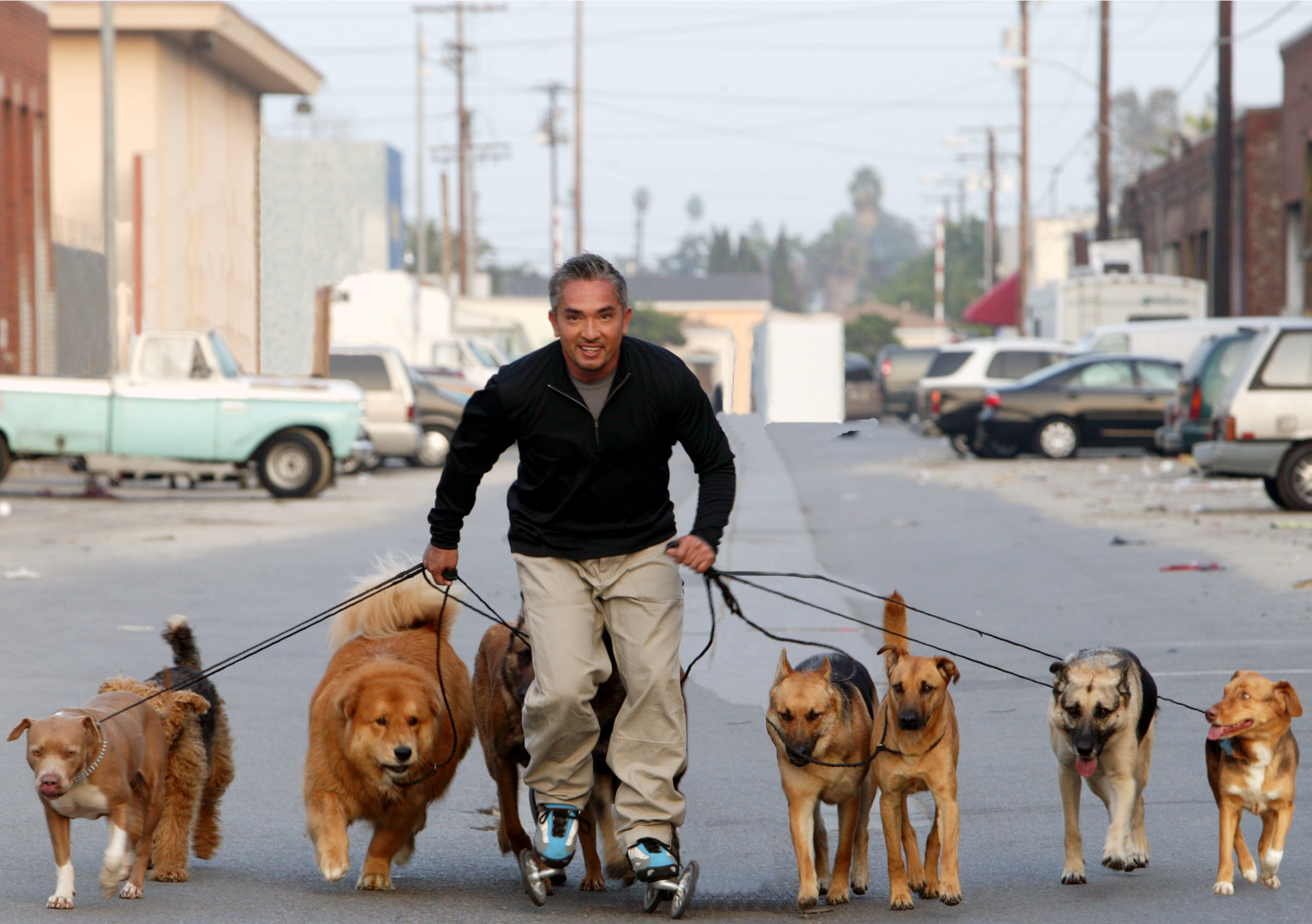How To Walk A Dog From A Rolling Walker