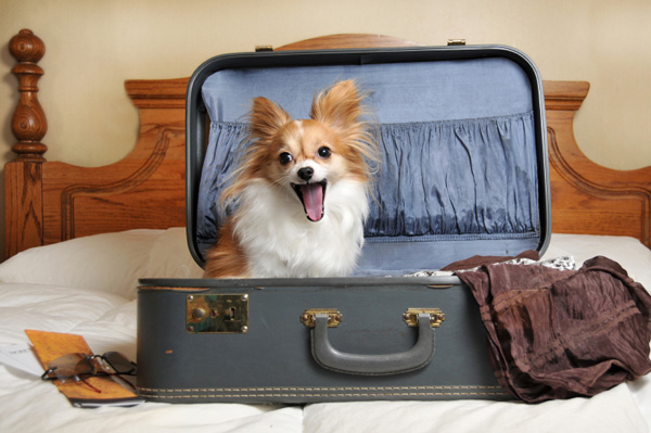 Image result for dog going on vacation