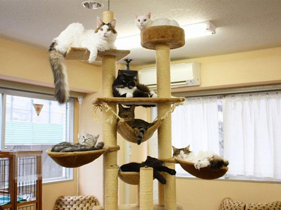 en savoir un peu plus sur le premier caf des chats paris yummypets. Black Bedroom Furniture Sets. Home Design Ideas