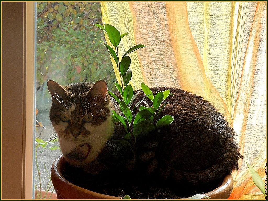 3 astuces pour emp cher votre chat de jouer avec vos plantes protection animale doctissimo. Black Bedroom Furniture Sets. Home Design Ideas