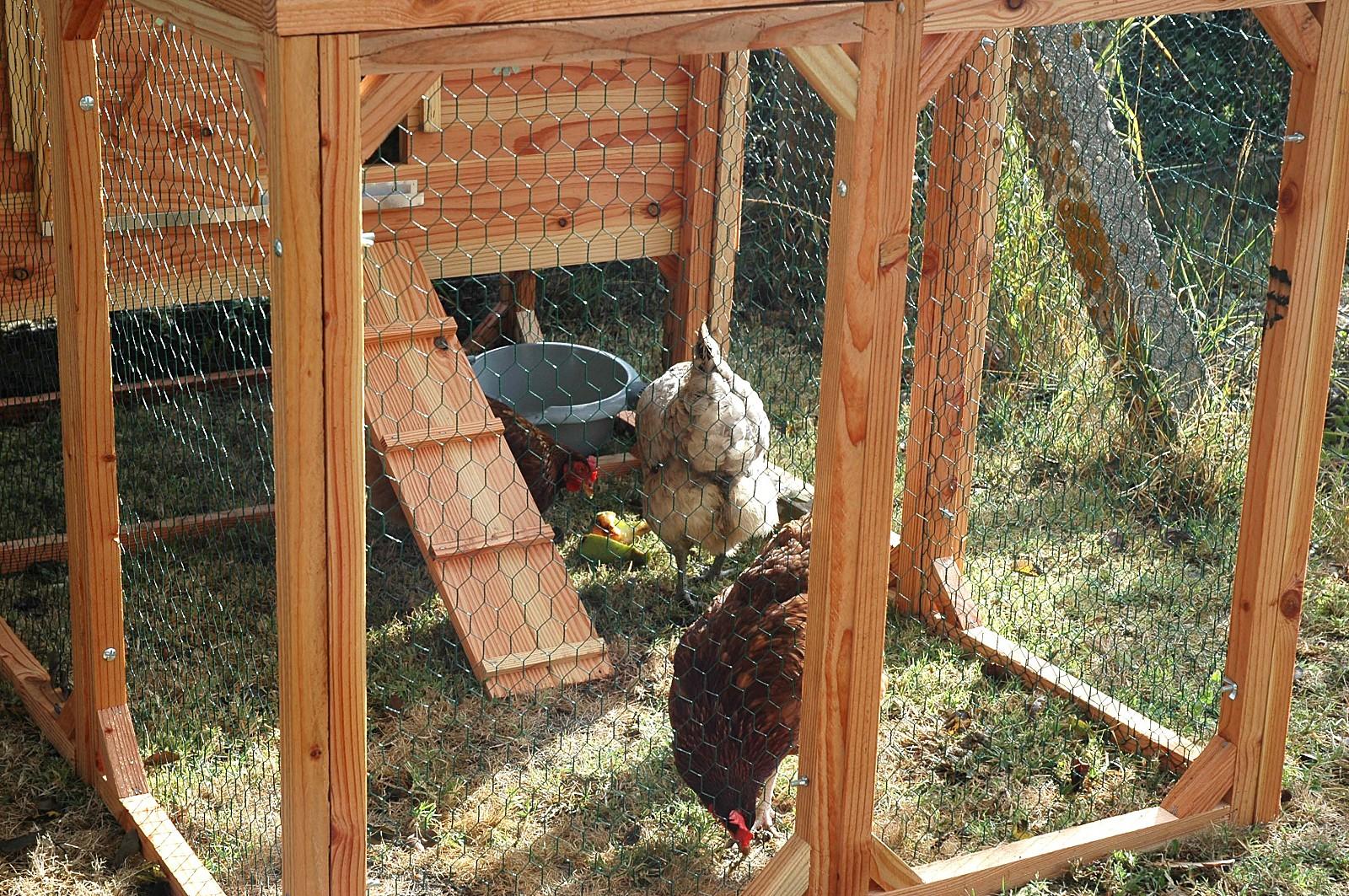 et si vous aviez des poules dans votre jardin. Black Bedroom Furniture Sets. Home Design Ideas