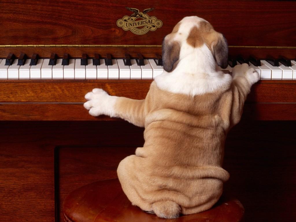 Πως επιδρά η κλασσική μουσική στα ζώα ;
