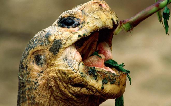 Common turtle diseases.