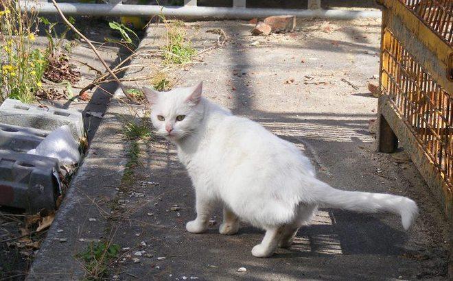 Les chats de Roubaix... Un témoignage poignant !