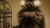 Colonel Meow, the cat you must obey!