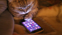 iPhone 5S for kitties!