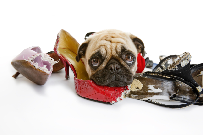 How To Stop A Dog From Chewing Shoes
