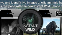 Protect animals from poachers with the Instant Wild app!