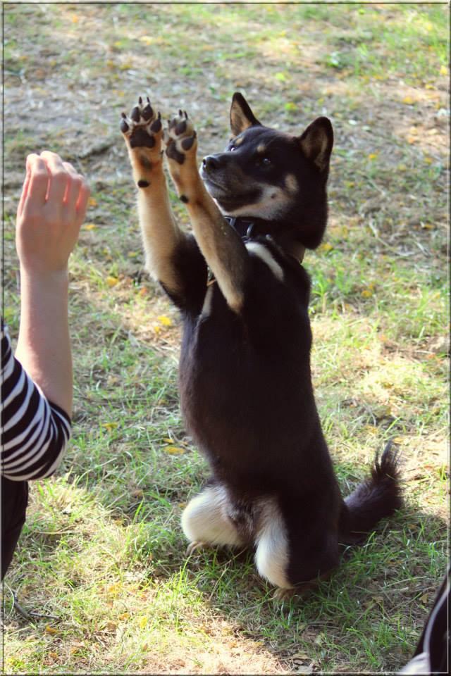 Site de rencontres canines