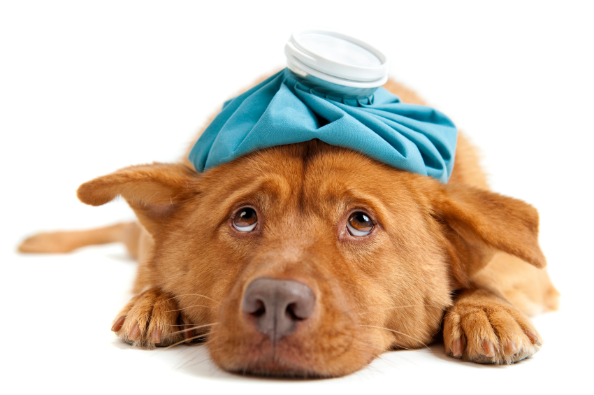 mystery dog illness 580 u s dogs reported dead   yummypets