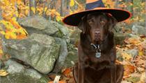 Keep your pets safe on Halloween!