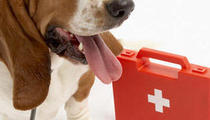 DIY: First aid kit for your dog