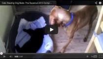 Animal video: Kitty thieves!