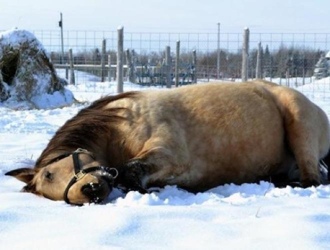 blog_yummets_cheval_neige_11_01_14.jpg