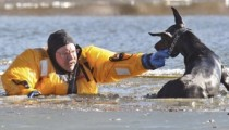 A dog rescued from icy waters
