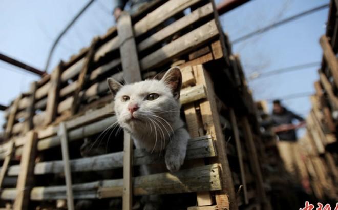 Des activistes sauvent 2800 chats en Chine