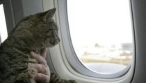 A cat survived a flight by -50 °C