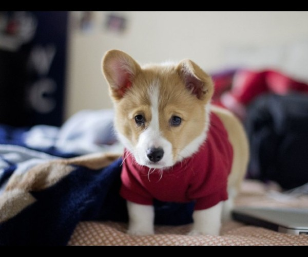 35 Of The Most Cutest Puppies On Earth Yummypets