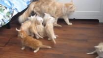 Mother cat epic fail!