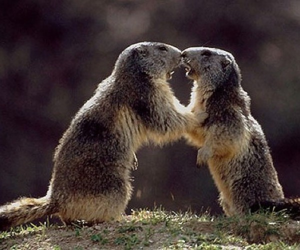 Site de rencontre amoureux animaux