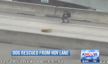 An American saves a dog in the middle of the highway