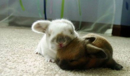 Animals who think they are pillows - Part 1