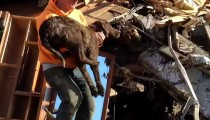 Dog miraculously survives a mudslide
