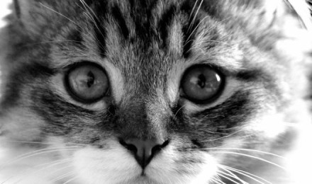 20 facts about cat that you don't know