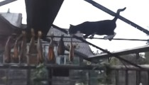 This acrobatic cat would do anything for food