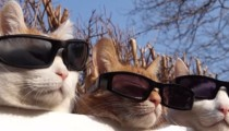 A cat's life, the video that will make your day sunny!