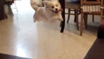 This dog's epic fail will make your day