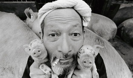A Japanese farmer befriends his pigs