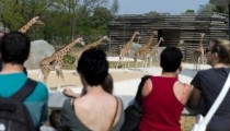 Paris Zoo: 25,000 visitors for reopening
