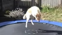 These pets aren't bunnies but they love the trampoline!