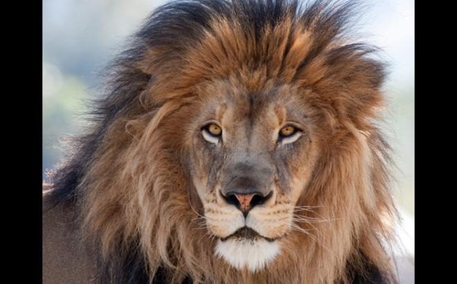 Les animaux incroyables ayant sauvé leurs maîtres !