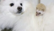 This unexpected friendship will make you melt!