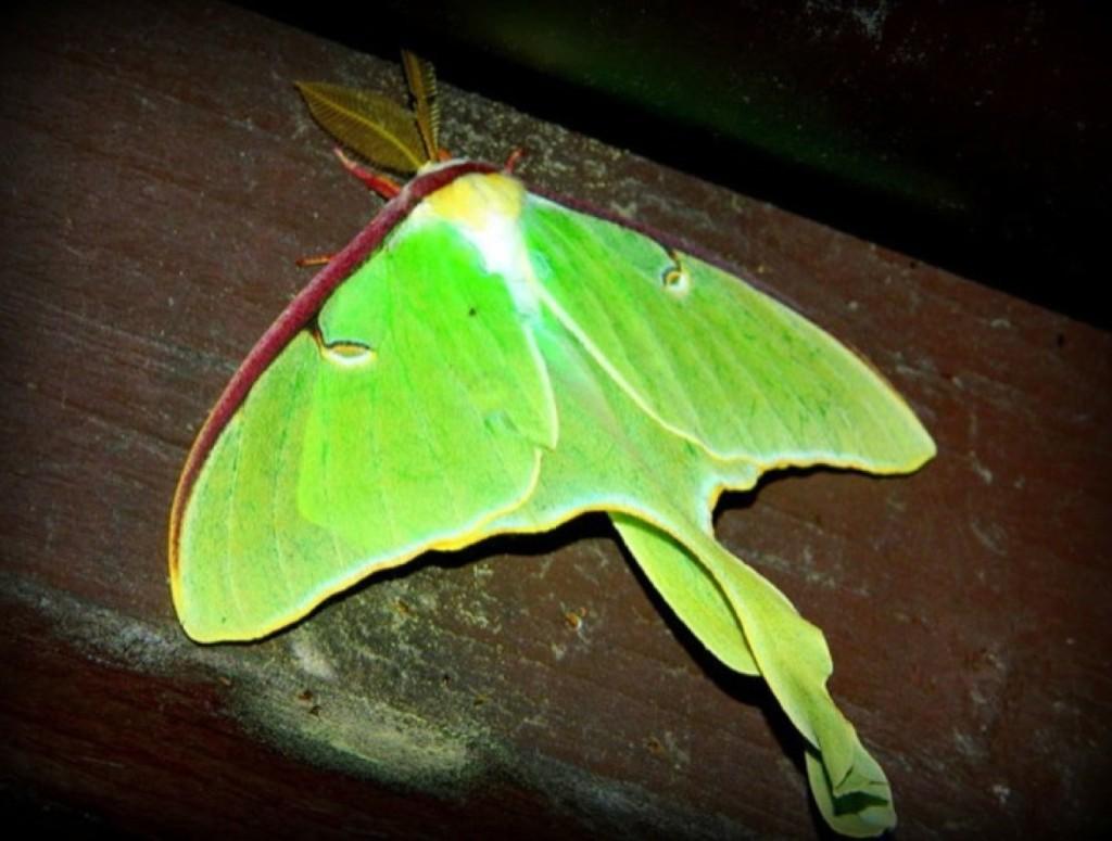 301 moved permanently - Duree de vie papillon de nuit ...