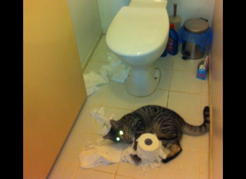 Papier toilette perla images - Rouleau papier toilette ...