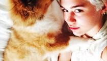 Miley Cyrus adopts a dog