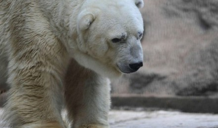 Save Arturo the saddest bear in the world