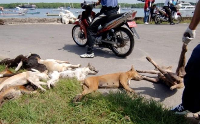 Bali massacre les chiens errants pour lutter contre la rage