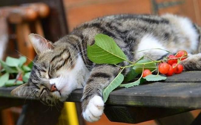La chaleur de l'été, un stress pour votre chat