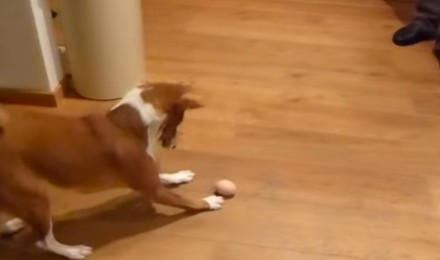 The dog and the frightening egg