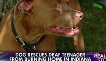 A pit bull saves a deaf boy from fire