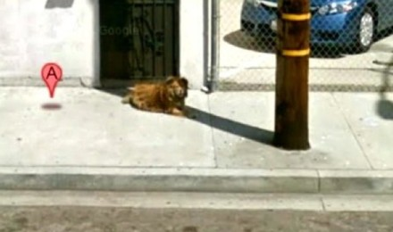 How Google street view helped save a dog?