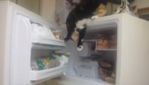 Smarty cat robs a piece of fish from the freezer
