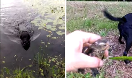 This dogs saves a baby bird from drowning