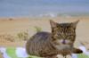 Lil Bub having a summer blast at the beach !