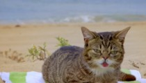 Lil Bub having a summer blast at the beach !