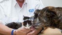 A 3 legged dog saves 5 kittens trapped under a roof